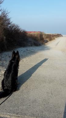 Honden in de duinen